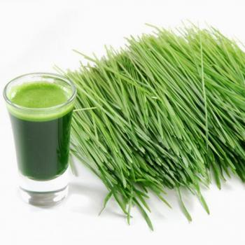 1KG Fresh Harvested Wheatgrass