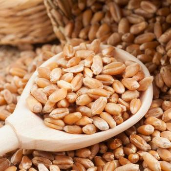 Wheat Grain - Seed (per KG)